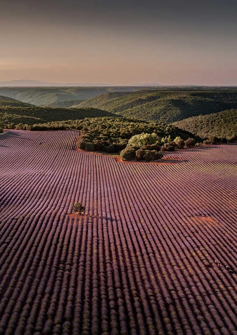 fotografia-aerea-con-dron-campo-lavanda