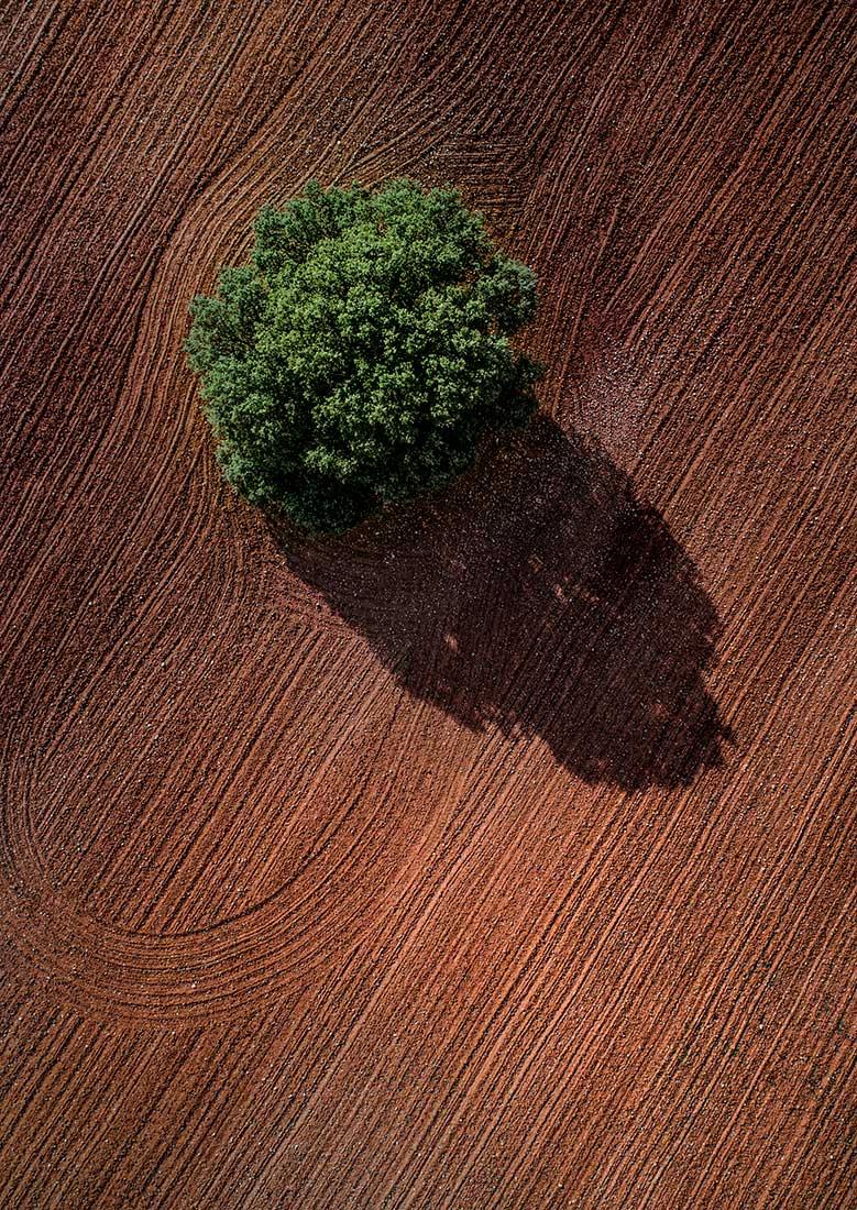 fotografia-aerea-con-dron-arbol-solitario